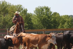 Local horse ranch reins in real-life cowboys
