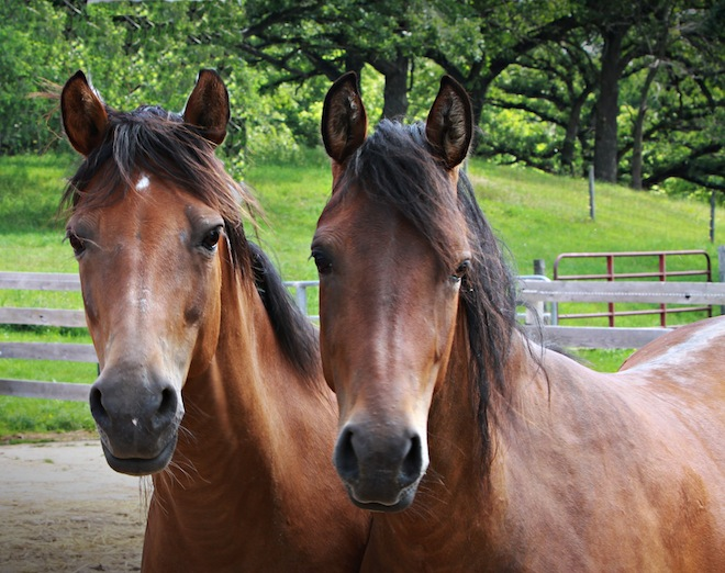 Horse virus confirmed, owners urged to lock-down stables
