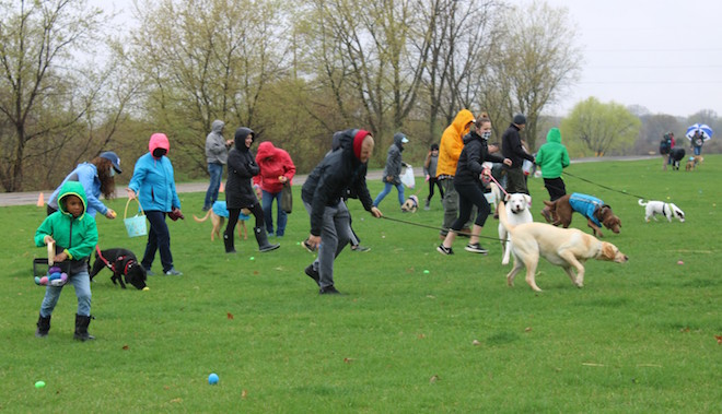 Area Easter egg hunt goes to the dogs